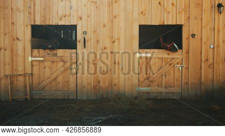 View From The Horse Stable With Separate Stalls For Horses. Two Seal Brown Horses Looking Out From T