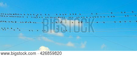 A Flock Of Starlings Sitting On Wires. Against The Blue Morning Sky. Wide Photo.