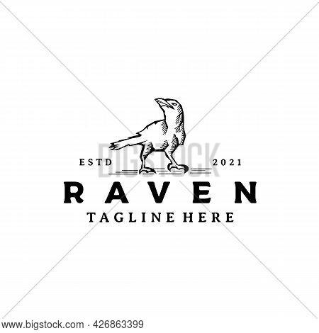 Vintage Crow Raven Logo Design Vector Illustration