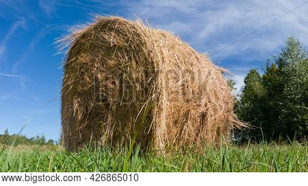 Single Hay Roll Bale In Field During Sunny Summer Day, Cattle Fodder Over Winter Time