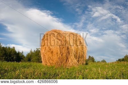 Country Scene With Single Hay Roll Bale In Field Against Cloudy Sky During Sunny Summer Day, Cattle