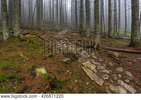 View Of The Bialki Valley In The Tatra Mountains Near Zakopane. A Hazy Spring Day.