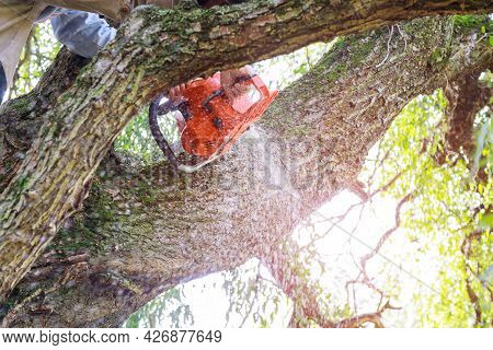 Man Pruning Tree Branches Work In The City Utilities After A Hurricane Storm Damage Trees After A St