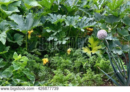 Organic Permaculture  Garden With A Lot Of Vegetable. Leak, New Zealand Spinach And Carrot Growing I