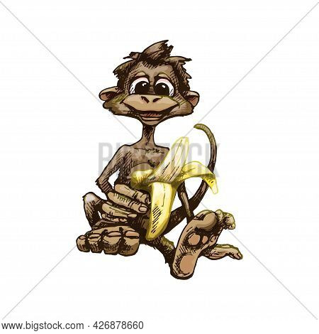 Monkey Holding Banana Half Peeled. Vintage Vector Hatching Color Hand Drawn Illustration Isolated On