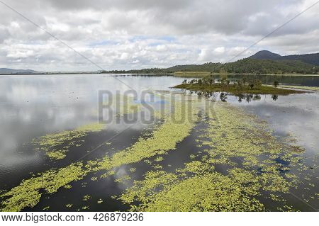 A Tiny Island On A Dam With A Swath Of Water Plants And Wildlife Swimming. Kinchant Dam, Queensland,