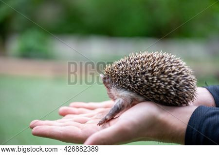 Prickly Kid Sits On His Palms And Snorts