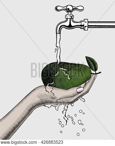 Ripe avocado in a female hand on a white background. A hand washes an avocado under a water tap. Vintage engraving stylized drawing.