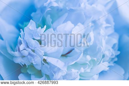Soft Focus, Abstract Floral Background, Pale Blue Peony Flower Petals. Macro Flowers Backdrop For Ho