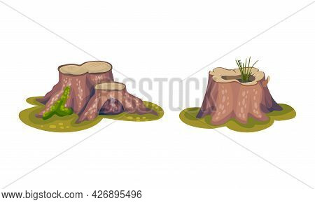 Tree Stump As Small Part Of Trunk With Roots In The Ground Vector Set