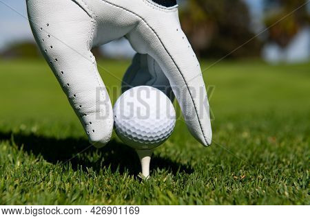Hand Putting Golf Ball On Tee In Golf Course. Golf Ball In Grass.