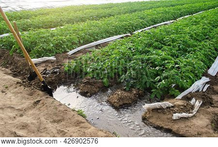 Furrow Irrigation Of Potato Plantations. Irrigation System To A Farm Field. Agriculture Industry. Cl