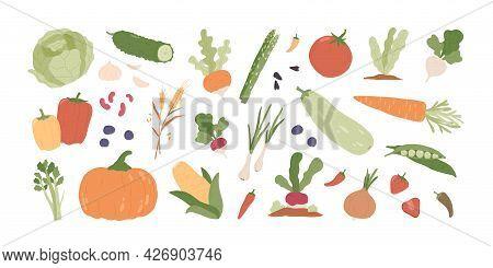 Set Of Fresh Organic Farm Vegetables. Healthy Vegetarian Food. Autumn Harvest Of Pumpkin, Carrot, On