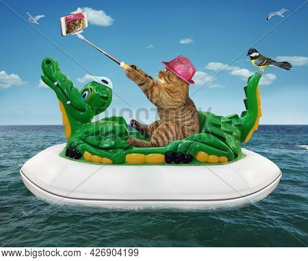 A Beige Cat In A Pink Hat With A Smartphone Is Taking Selfie And Floating On An Inflatable Crocodile