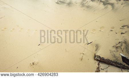 Round Sequential Footprints On A Sandy Beach