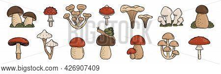 Set Of Cute Doodle Mushrooms. Edible And Poisonous Mushrooms, Fly Agaric, Toadstool, Porcini Mushroo
