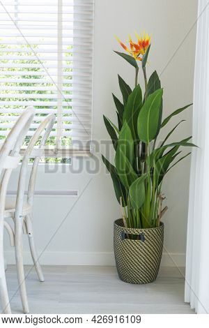 Green Plant In Basket At The Corner With Soft Sunlight From The Window At A Home