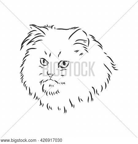 Hand Drawing Persian Cat Vector Version Persian Cat Vector