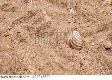 Beautiful Beige Shell Of A Mollusk Lies On The Background Of Sand On The Beach Of The Black Sea, Clo