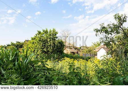 Overgrown Home Garden In Village On Sunny Summer Day