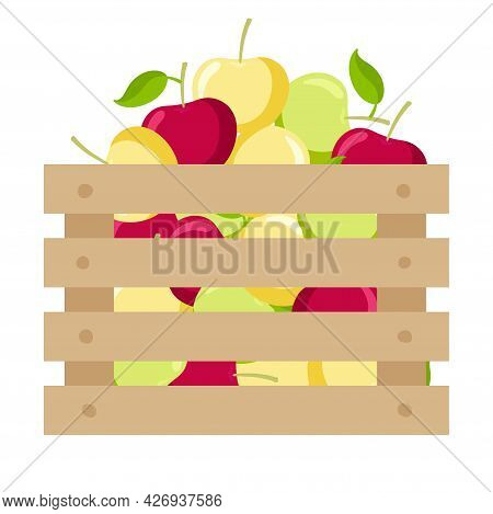 Wooden Box With Red, Green, Yellow Apples. Ripe Apple Fruits Garden Harvest In Wooden Box. Bright Su