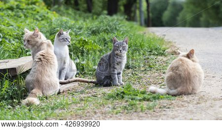 Stray Cats Are Sitting On The Roadside. Adult Cats And A Gray Kitten. Homeless Animal.