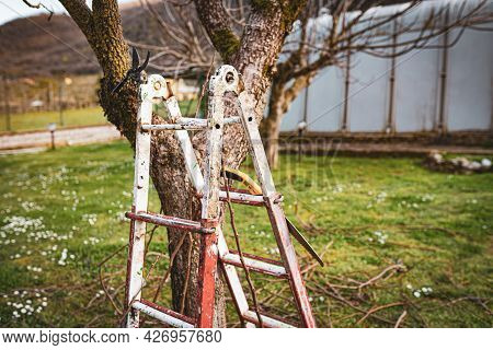 Metal Ladder Standing Undertake Pruned Tree In The Garden, Hand Chainsaw Hanging On Ladder. Cut Dry