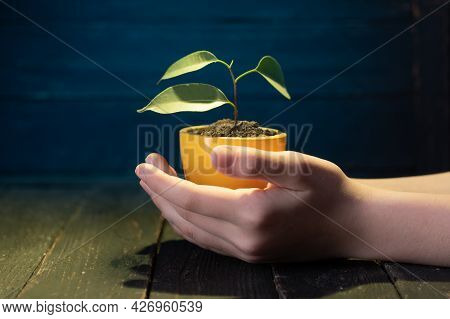 A Small Flowerpot With A Plant. Small Flowerpot In Hand. Yellow Flowerpot With A Flower. Pot And Pal