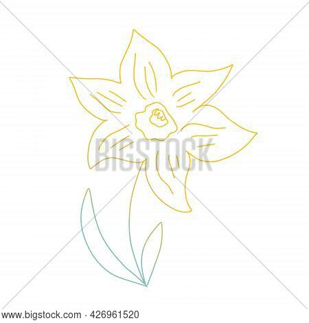 Daffodil Flower In Colored Ink Outline Isolated On White Background. Minimalist Line Simple Sketch.