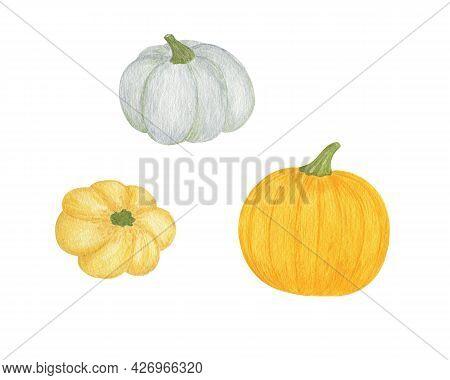 Pumpkins Set Hand Drawn Watercolor Illustration Orange Vegetable For Seasonal Autumn Holidays Celebr