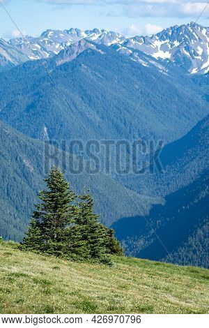 Trees Growing Along A Sloped Mountainside At Hurricane Ridge In Olympic National Park
