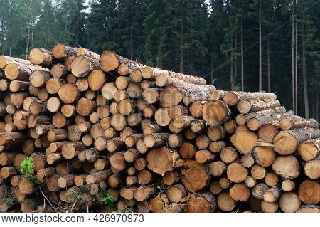 Freshly Cut Logs Are Piled Up Near A Forest In The Summer