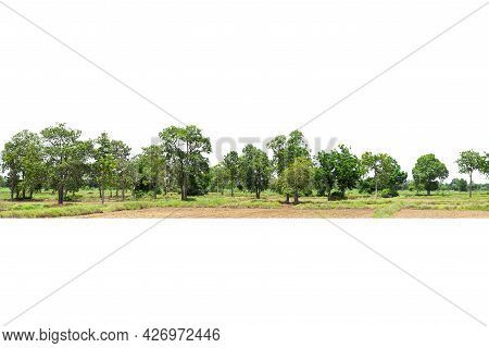 View Of A High Definition Treeline Isolated On A White Background,  Group Of Tree Isolated On White.