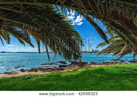 Beach And Tropical Beach
