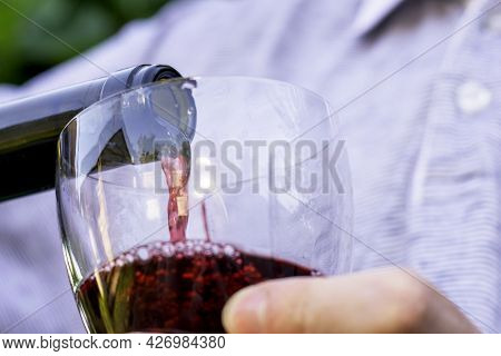 The Winemaker Pours Wine From A Bottle Into A Glass Against The Background Of Grape Bushes