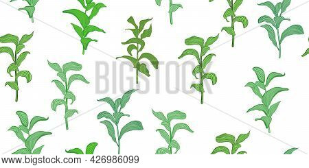 Vector Seamless Pattern With Green Leaves On Stems Isolated On White. Botanical Design In Green Colo