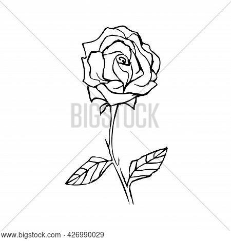 Line Art Flower Rose Vector Illustration. Outline Flower. Doodle Style. Hand Drawn Rose For Design,