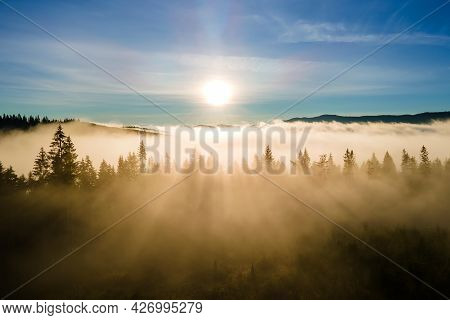 View From Above Of Dark Moody Pine Trees In Spruce Foggy Forest With Bright Sunrise Rays Shining Thr