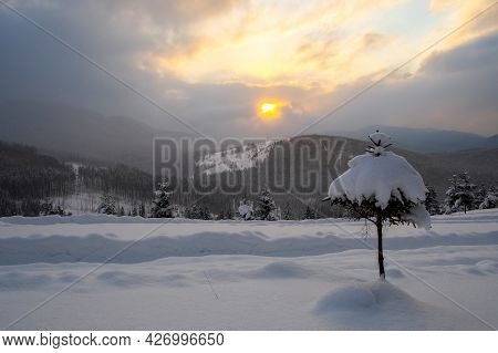 Moody Winter Landscape With Small Pine Tree On Covered With Fresh Fallen Snow Field In Wintry Mounta