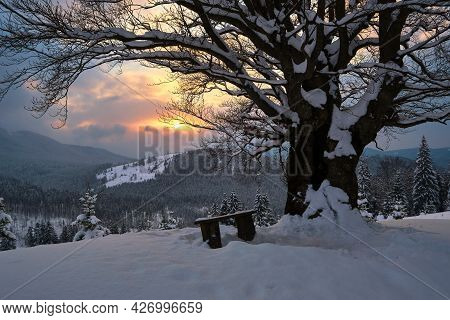 Moody Winter Landscape With Dark Bare Tree And Small Wooden Bench On Covered With Fresh Fallen Snow
