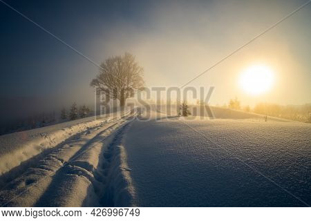 Moody Landscape With Footpath Tracks And Dark Bare Trees Covered With Fresh Fallen Snow In Winter Mo