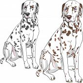 Sketch of the cheerful serious dog Dalmatian breed two different color one - with black spots and brown eyes the second - with brown spots and blue eyes poster
