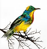 Spring vector background with realistic tropical vector bird poster