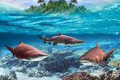Dangerous bull sharks in the tropical shallow water poster