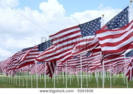 Field of Flags on Memorial Day