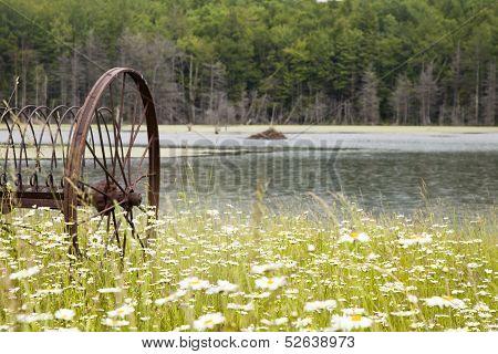 Daisy Field With Antique Farm Equipment