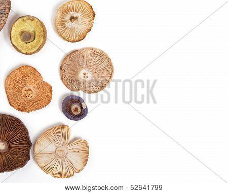 Mushroom Cap Background