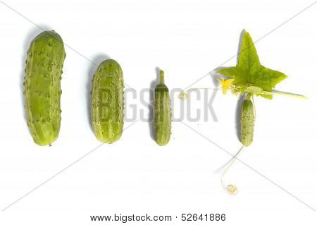 Growing Up Cucumber