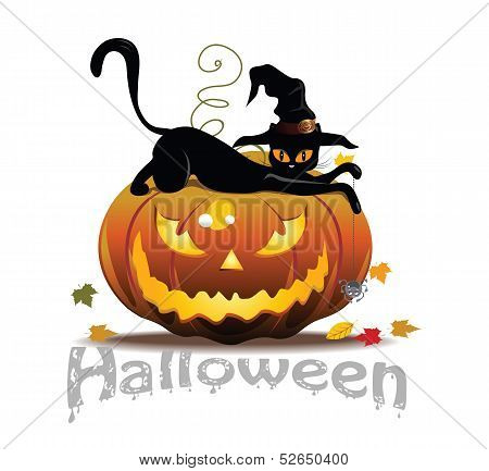 Cat and Pumpkin