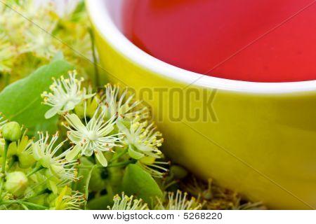 Fresh Tea Of Lime Blossom - Tilia Platyphyllos